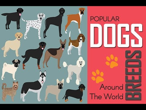 Dogs and Breeds | Best Dogs | Most Popular Dogs | A-Z Dog Breeds | Gigantic Dogs | Small Dogs