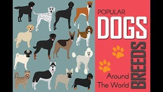 Dogs & Breeds, Best Dogs, Most Popular Dogs, A-Z Dog Breeds, Dog Gr...