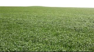 9 05 11 Agroprofi на пшенице