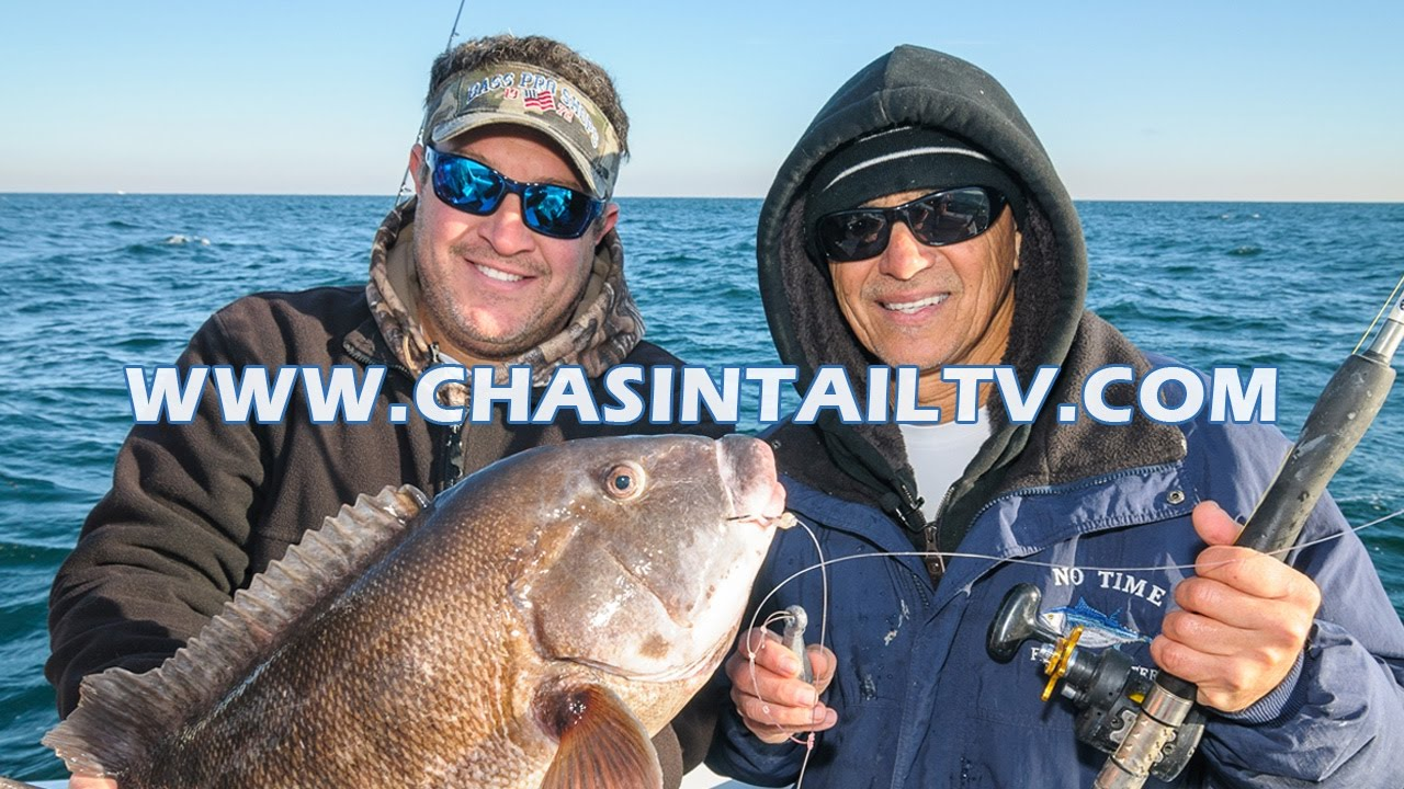 Late fall blackfish fishing with capt nick savene for Chasing tails fishing report