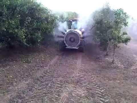 Pêra Rocha -  Pulverização de Pêra Rocha Bombarral