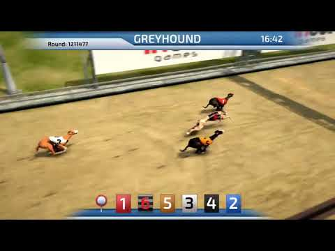 Greyhound 3D Virtual Dog Racing Inbet - Virtual Betting DOG Games