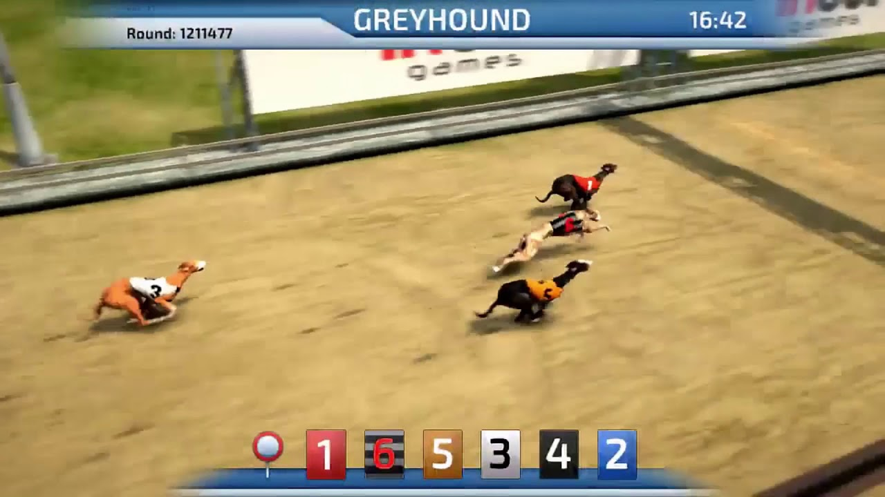Virtual Greyhound Racing Game
