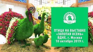 Смотреть видео Куры мясных и яичных кроссов на выставке «Золотая осень – 2019», ВДНХ, Москва онлайн