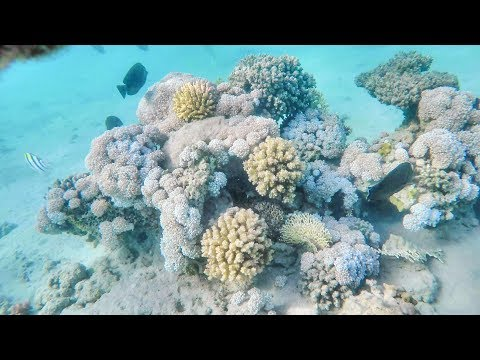 Snorkeling on the Coral Reef. Red Sea, Marsa Alam, Egypt