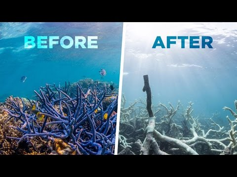 The Great Barrier Reef Is Dying