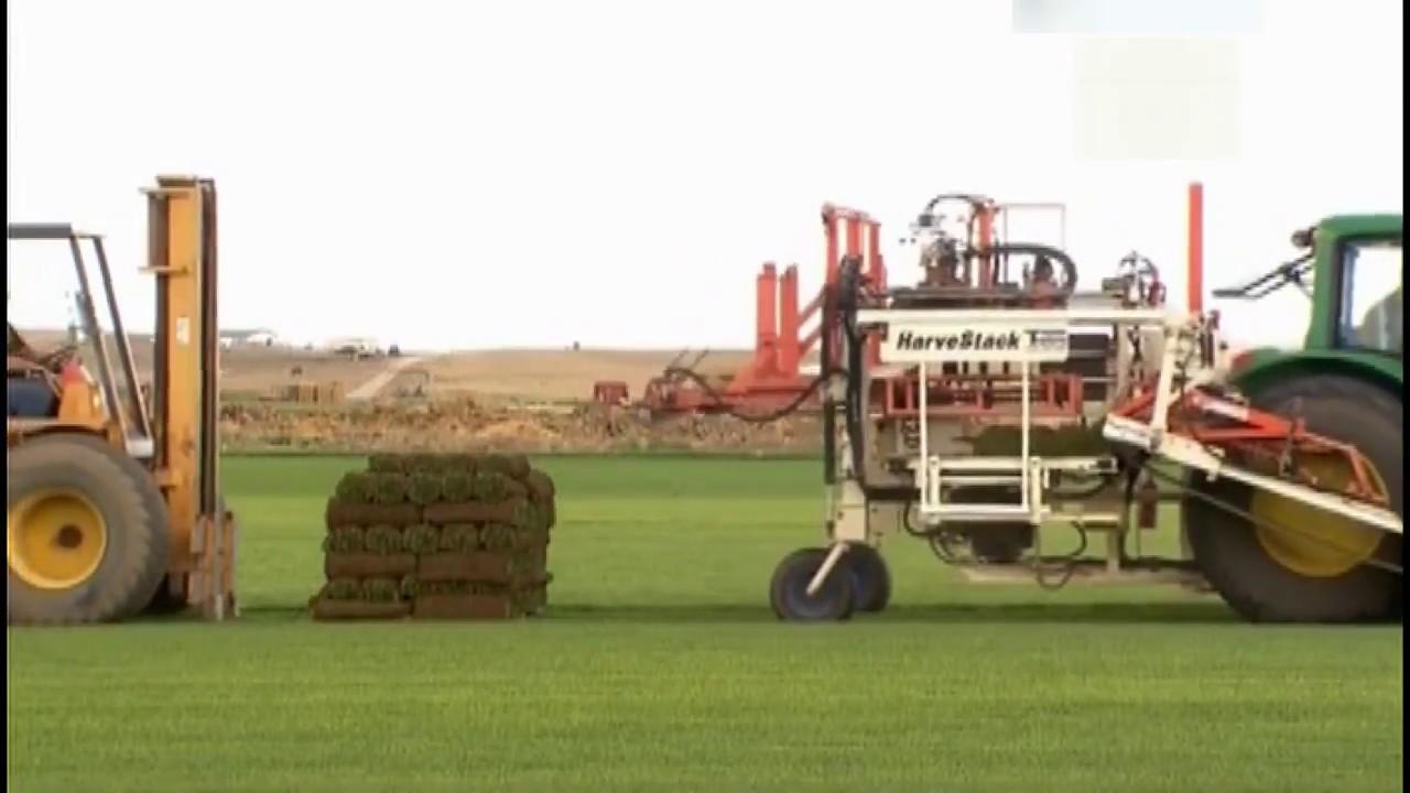 Рулонный искусственный газон. Купить рулонный газон из искусственной травы для декорации по низким ценам, газонная трава в рулонах.