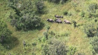 Protecting Elephants from the Air