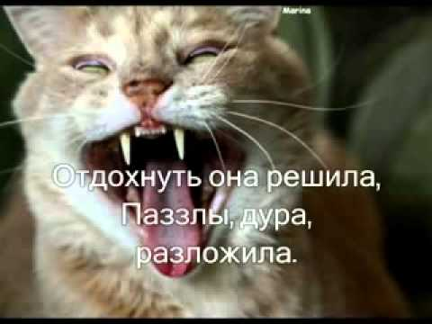 Дневник кота стихотворение