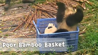 Nanny Look At Me, I've Hidden In The Basket | iPanda