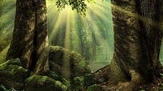 Celtic Tribal Music - Treefolk