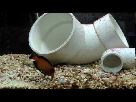 10 Day Quarantine for Saltwater Fish