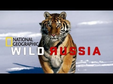 Beauty of Wild Russia Siberia National Geographic 2013 | Documentary Film
