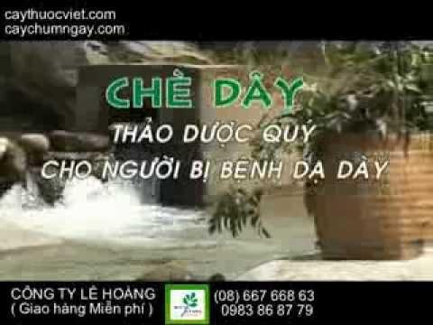 Chè dây Sapa l Chè Dây Cao Bằng l Che day