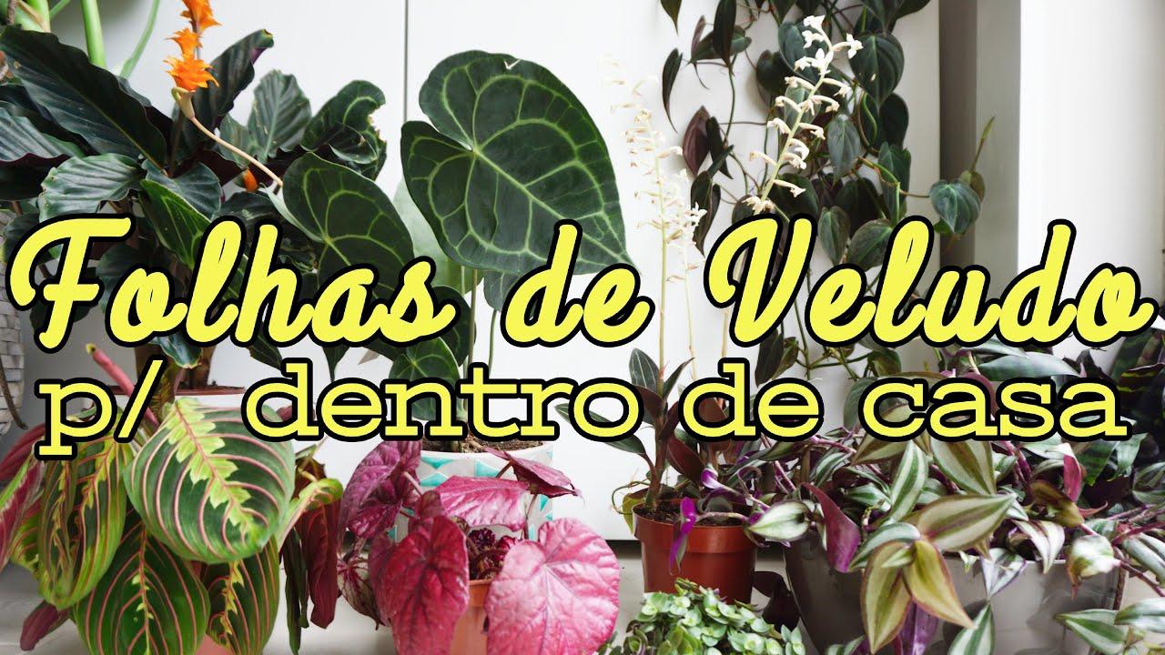 12 Folhagens Aveludadas pra Dentro de Casa. Filodendro, Antúrio, Orquídea, Begonia, Calathea Maranta