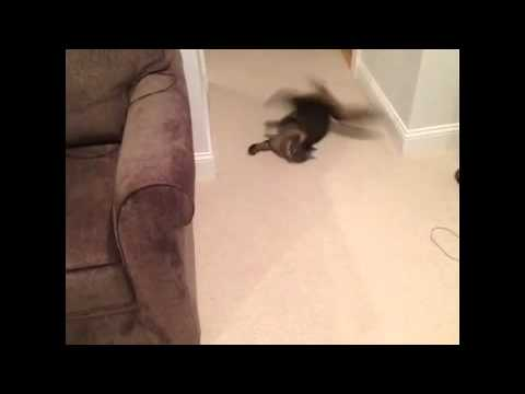 NEW cool cute cats vine video