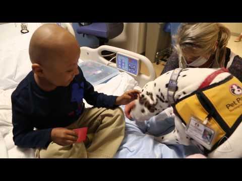 Pet Therapy at Johns Hopkins Hospital
