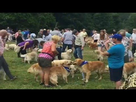 شاهد: اسكتلندا تحتفل بالذكرى الـ150 لتكاثر سلالة كلاب -الذهبي المسترد-…  - نشر قبل 1 ساعة