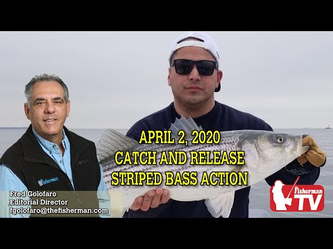 April 2, 2020 Catch And Release Striped Bass Action On This Week's Weekly Video Forecast