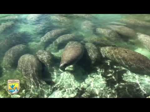 "Crystal River Refuge's ""Manatee Manners"" for Boaters"