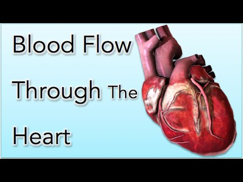 ✔ Blood flow through the Heart Animation - MADE EASY