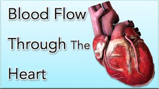Blood flow through the Heart Animation - MADE EASY