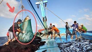 Cà Mau: ngư dân trúng mẻ khi lưới được cá tưởng đã tuyệt chủng
