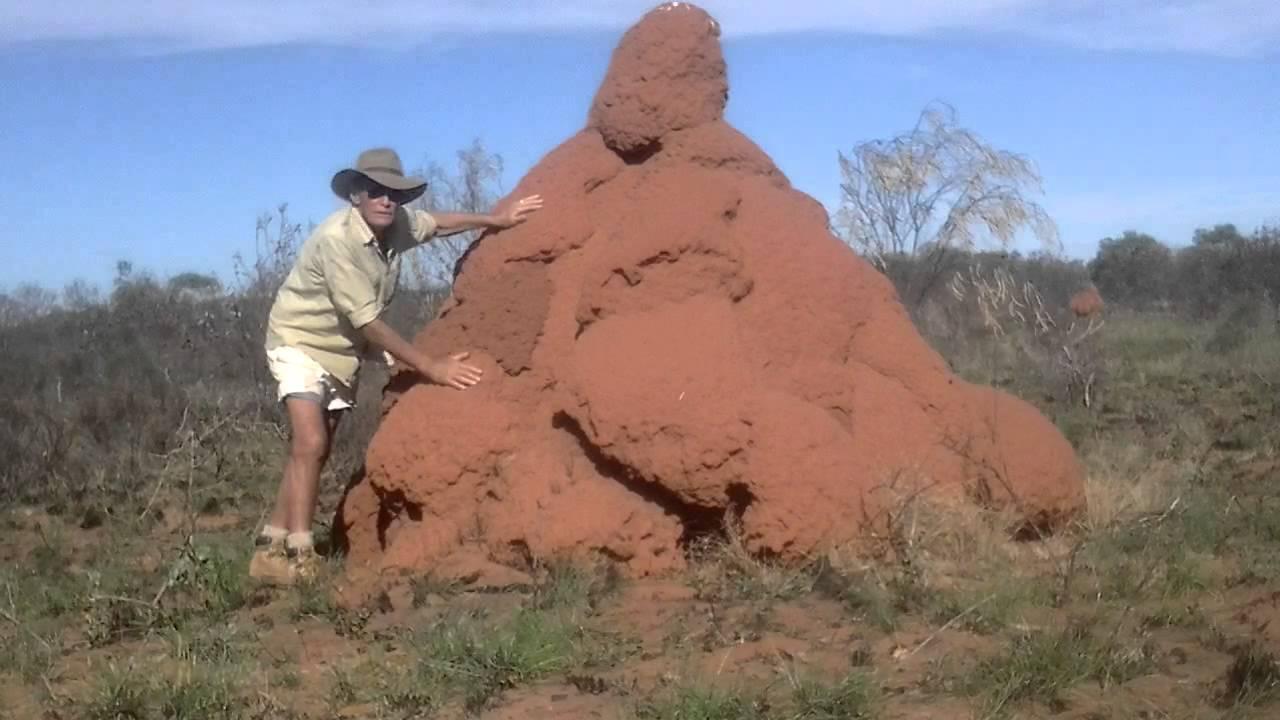 Termite Mounds Western Australia Youtube