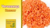 Оригинальные семена подсолнуха торгового бренда сингента. Акции и скидки. Доставка по всей украине почтой. Гибриды подсолнечника опера.