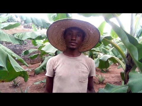Nigerian Farm Tour - Banana and Plantain Plantation