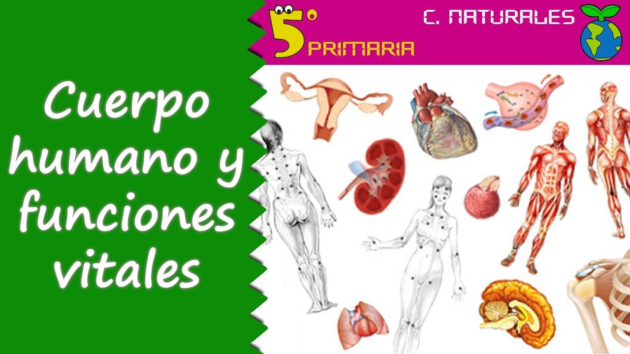 Cuerpo Humano Y Funciones Vitales Naturales 5º Primaria Tema 4 Youtube