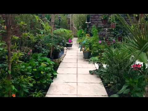My garden tour June 9th 2018 tropical, uk