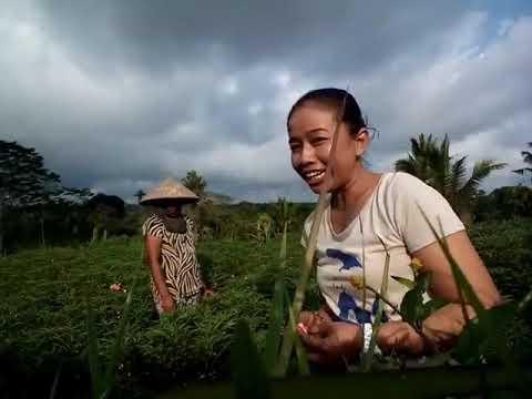 An interview woman farm on Bali Island