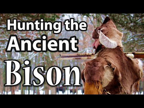 Hunting The Ancient Bison. Primitive Hunting With The Atlatl & Exploring Experimental Archaeology