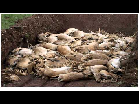 MYSTERIOUS & CATASTROPHIC! 120,000 Antelope Found Dead