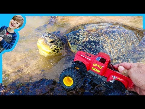 Monster Trucks for Children Find Sea Turtles!