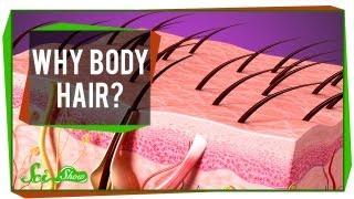 なぜ体に毛が生えるのか? 脇毛やすね毛の役割の違いも解説