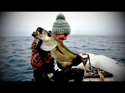 Spearfishing Big Pollock UK