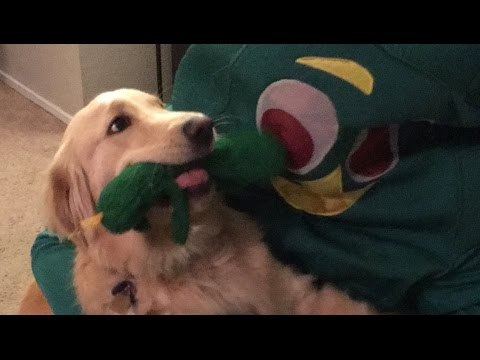 Guy dresses up as dog's favorite toy ORIGINAL