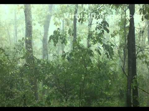 Foggy Mountain Rain - 2 Hour Relaxing Sound of Raining in Fog