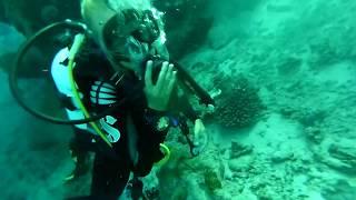 Red Sea Dive Safari