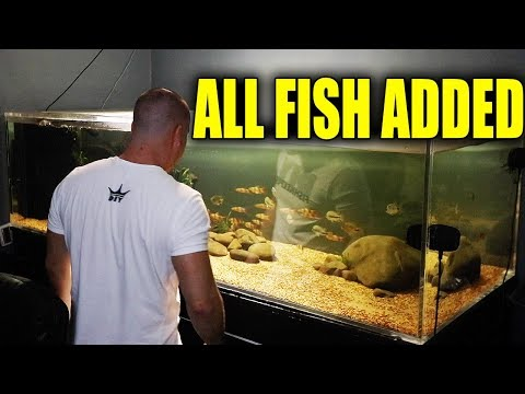THE FISH ARE IN THE AQUARIUMS!!
