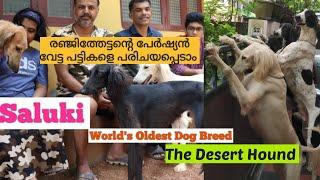 Saluki Hound  | Arab Hound Dog|പേർഷ്യൻ വേട്ട പട്ടികളെ പരിചയപ്പെടാം| Persian Hound Dogs| Hound Dogs