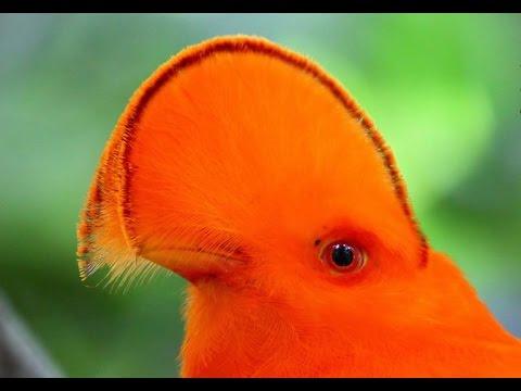 Коршун птица Описание коршуна с картинками