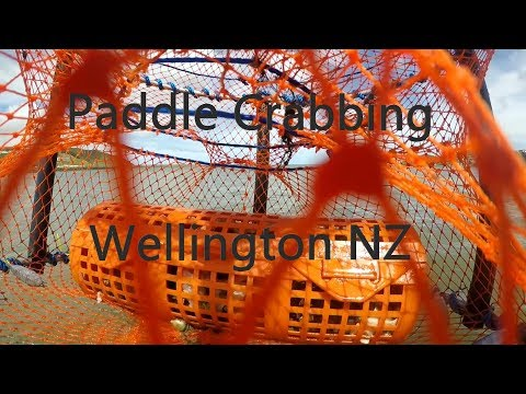 Crab Potting For Paddle Crabs Wellington NZ