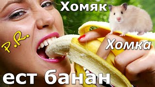 видео Можно ли давать хомякам банан