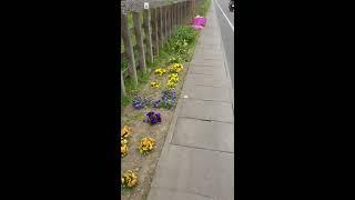 実家は東武日光線の線路際にあり、線路脇のところに母が花を植えていま...