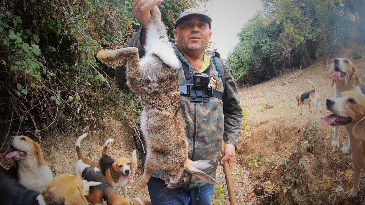 Cacería de Conejos Gigantes 2021  Regresan Los Beagles Al Canal