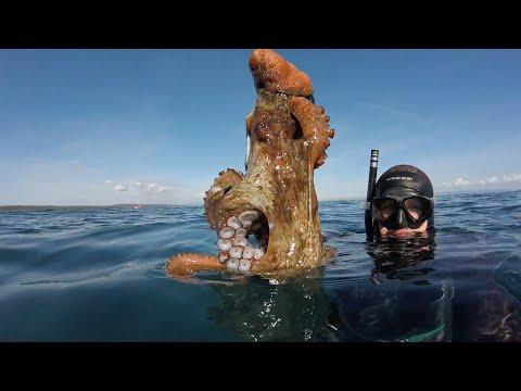 Podvodni ribolov - lov hobotnice rukama