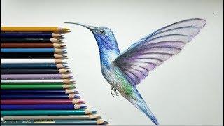 色鉛筆でハチドリを描いてみた How to draw hummingbirds